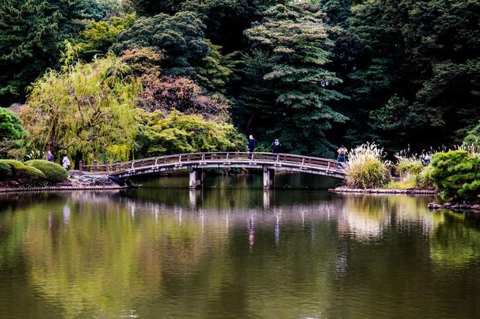 バラの他にも広大な園内は秋景色が広がり見どころいっぱい。のんびりと花と紅葉を満喫しながら散策した後は、新宿でショッピングや食事を楽しむ。そんな穏やかな秋のコースはいかがですか?