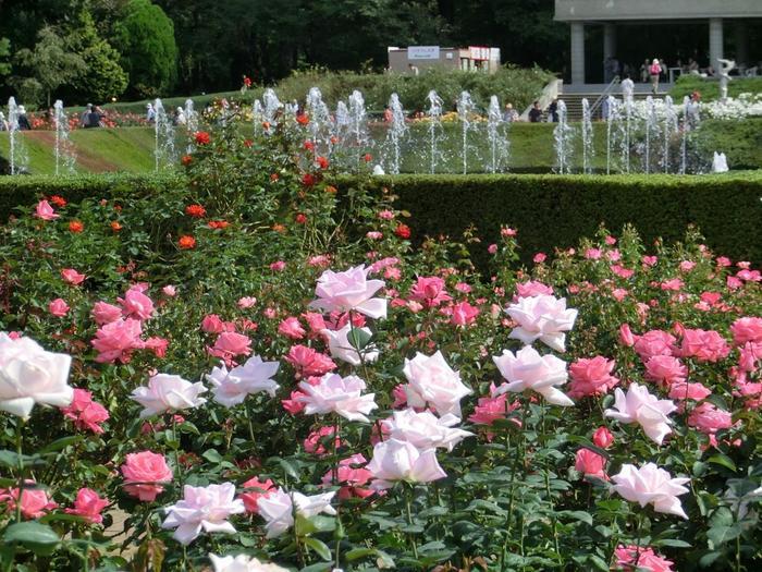 京王線のつつじヶ丘駅、同じく京王線の調布駅、またはJRの三鷹駅・吉祥寺駅からそれぞれバスで約20分の距離にある「都立神代植物公園」。
