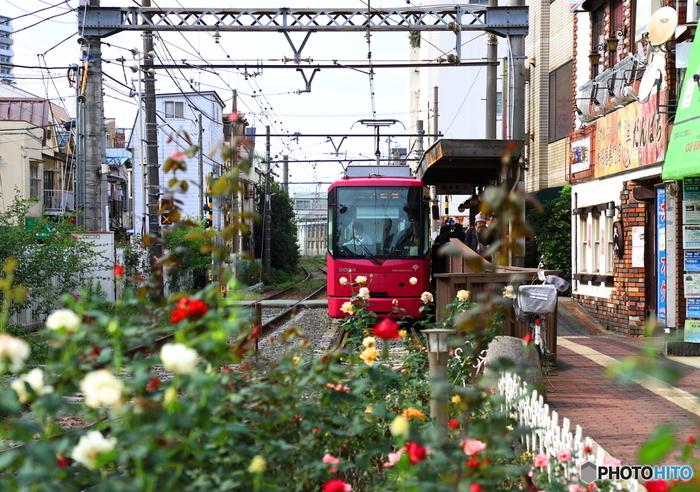 荒川区の三ノ輪橋から新宿区の早稲田まで、12.2キロメートルの区間を走る都電荒川線。