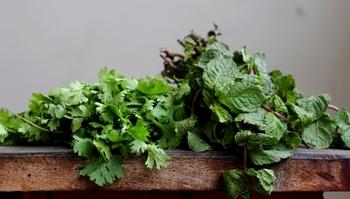 「ツルムラサキ」と似ている野菜に「モロヘイヤ」があります。見た目だけではなく、どちらも夏が旬で、粘り成分を含むネバネバ野菜。栄養価も実は大差ないのですが、若干「ツルムラサキ」のほうが、風味のクセが強いといえます。 (ただし、そのクセこそが美味しい!という方も多くいらっしゃいます)  ※上写真は「ツルムラサキ」