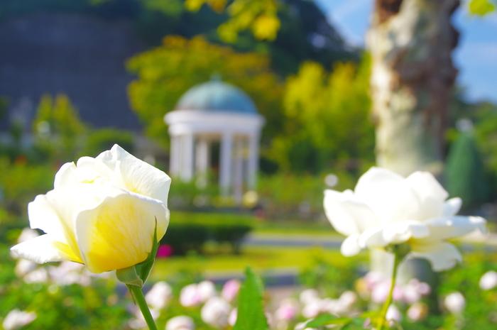 フランス式花壇や噴水など、フランス庭園様式を取り入れた公園として、平成13年に完成した「ヴェルニー公園」。園内には、日本初の遣米使節を務め、フランスの支援のもとで横須賀製鉄所建設を推進した小栗上野介と、フランス人の造船技師で、同じく横須賀製鉄所建設の責任者として1865年に来日したヴェルニーの像があり、公園の対岸にはその横須賀製鉄所を望むことができます。