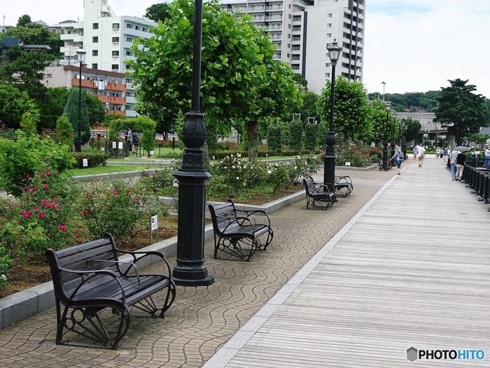 JR横須賀駅から徒歩約1分の距離にあり、入園無料の公園には海を見ながら休憩ができる「いこいの広場」や、海風を感じながらのんびり散策ができる「うみかぜの路」などがあり、バラと海を眺めながら秋の一日をまったり過ごすのも素敵。
