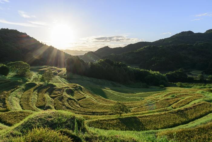 面積約3.2ヘクタールの傾斜地に、田んぼが階段のように連なっている美しい景色。里山の美しい風景にどこか懐かしさを感じながら太陽を眺める時間はとても贅沢に感じられそうです。