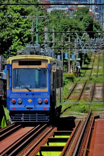 小さな電車でのんびり巡る秋のバラと東京の街は、いつもと違ってゆったりとした時間が流れているように感じるかも。