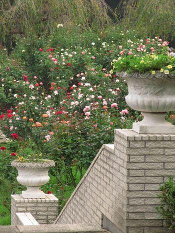 埼玉県狭山市にある智光山公園(ちこうざんこうえん)。東京ドーム約11個分の広大な敷地をもつ園内には、智光山公園こども動物園、野外活動広場(キャンプ場)、テニスコートなどの施設や、狭山市都市緑化植物園のバラ園があります。