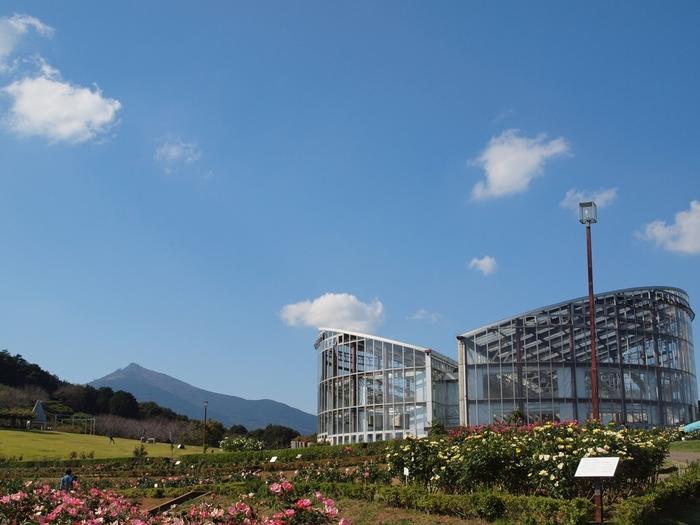 JR石岡駅からバスで約30分。常磐道土浦北ICから車で約20分の距離にある「茨城県フラワーパーク」。筑波山のすそ野に広がる、自然豊かな花のテーマパークは、フラワードーム(温室)や、延長800mの花のすべり台(スポーツライド)、10種類のフィールドアスレチックなどがあり、休憩所やレストランもあるので一日中のんびりと楽しめます。