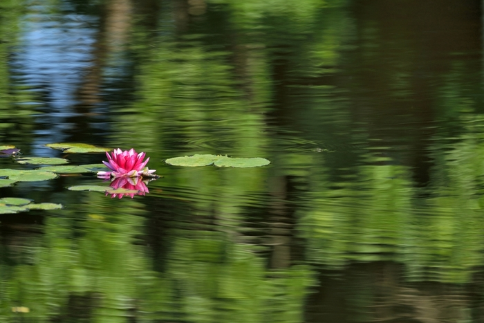 園内には、芝生広場、和風庭園、スイレン池、シャクヤク園、バラ園などがあり、四季折々の美しい花をいつ訪れても楽しめます。
