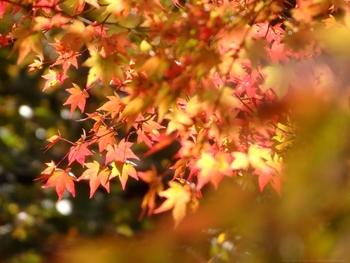 秋にもある《土用の日》。季節の変わり目に、食べたいもの・したいこと