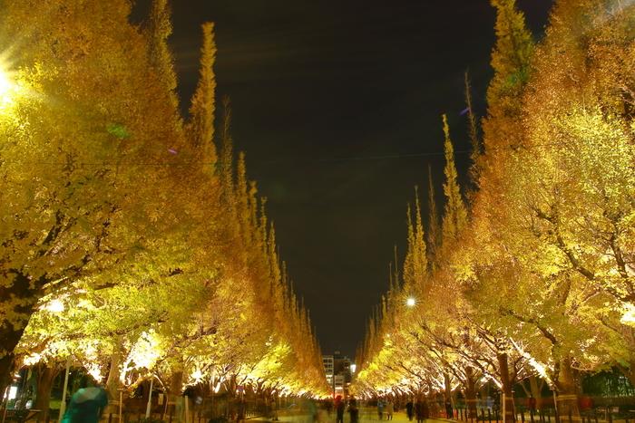 ライトアップされた夜のいちょう並木もロマンティックです。仕事帰りにいちょう並木を訪れる、大人のデートも素敵かもしれませんね。