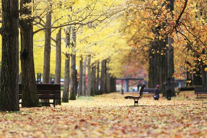 いちょう並木の脇にあるベンチでのんびり座って、黄葉を眺めるのも◎広い公園内には、体育館やテニスコート、サッカー場などの他、ピクニックできる広場や遊具などもあるので家族みんなで楽しめますよ。