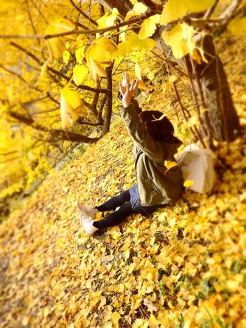 今回は、紅葉を見に遠くに出かけなくても楽しめる、身近な「いちょう並木」をご紹介します。