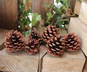 秋から冬にかけての季節感を演出するなら、松ぼっくりがぴったり。不揃いな形や色がまた素敵です。 季節が合えば、公園等で探してみるのもおすすめです。