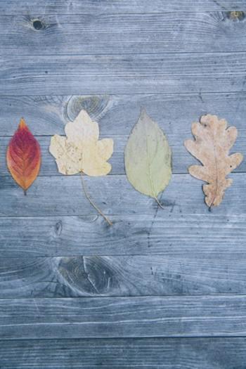「土用」は、雑節と呼ばれる暦の1つ。節分・彼岸・八十八夜などと同じように季節の変わり目を表す特別な暦日で、春土用・夏土用・秋土用・冬土用と4つがあります。 もともとは中国の陰陽5行説に由来しているそうで、春は木、夏は火、秋は金、冬は水の象徴だと考えられているとか。