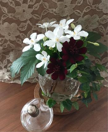 南国の香り漂う「セイロンライティア」も、チョコレートコスモスと組み合わせることでしっとり落ち着いた雰囲気に。グラスやポットに飾っても素敵ですね。