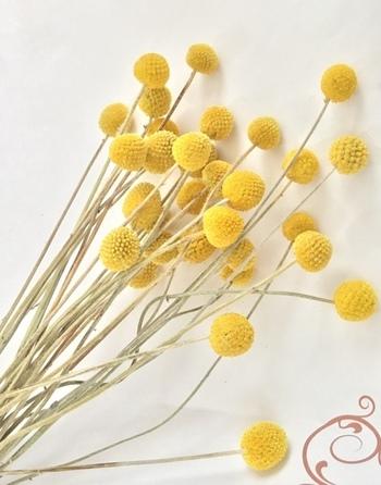 秋になるとドライフラワーのナチュラルな色味が恋しくなります。すっきりおしゃれに飾る簡単なコツは、花材を1種類に絞ること。高さの違う花を選ぶことで、一種類でも寂しい印象になりません。