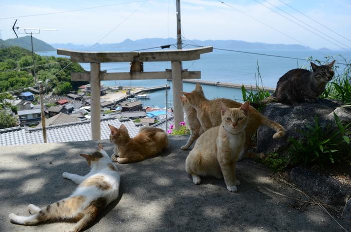 島を訪れる際は、猫に勝手にエサを与えないようにしましょうね。マナーを守ってかわいい猫たちとの交流も楽しんで。写真は豊玉姫神社の境内。男木島で人気のビュースポットです。猫と島の景観のコラボがたまりませんね。