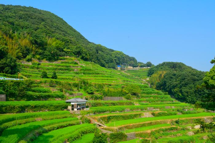 小豆島の真ん中にある中山地区には沢山の棚田があり、千枚田とも呼ばれています。日本の棚田百選にも選ばれ、700を超える大小の田んぼが広がっています。黄金色に輝く稲穂の時期もおすすめですよ。 どこか懐かしさも感じる、フォトジェニックな景色をぜひ体感してみて。
