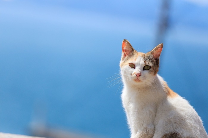 男木島は「猫島」と呼ばれるほど、たくさんの猫が暮らしています。猫好きな方にとってはたまらない島ではないでしょうか。 島のゆったりした雰囲気の中で、気ままにくつろいでいる猫の姿に癒されます。
