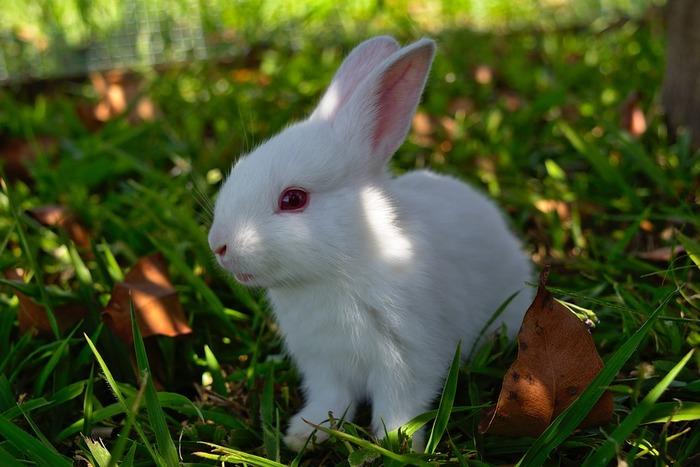 毎月1日の朝起きて一番最初に「White rabbits, white rabbits, white rabbits!」と口にすると幸運が訪れるそう。この言葉は絶対に朝一番でなければならず、寝惚けて少しでも違う言葉を呟いてしまうとダメ。また次の月にチャレンジしましょう。