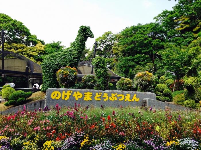 「野毛山動物園」は、JR京浜東北線の「桜木町」駅から歩いて15分ほどのところにあります。桜の名所として知られる野毛山公園の敷地内にある市営の公園です。約2時間あればゆっくりまわれる広さですが、飼育されている種類はおよそ100種類。無料なので、気軽に行けると人気のスポットです。