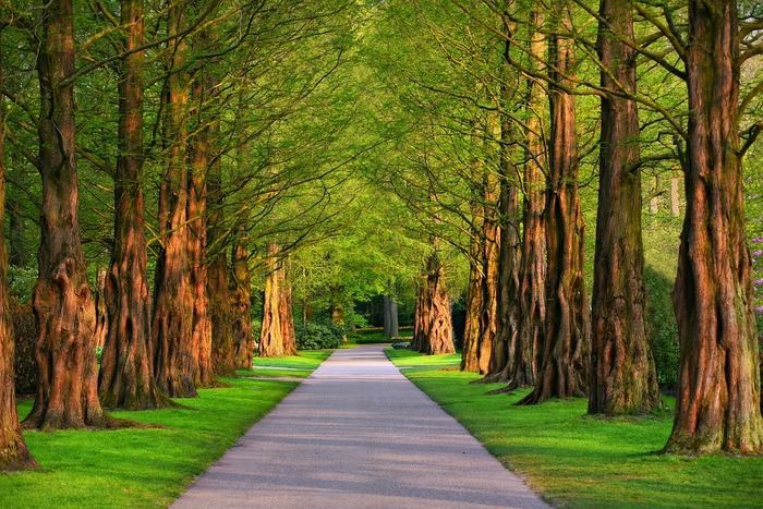 古代ヨーロッパでは木に神が宿っていると信じられており、何か良くないことが起こったときや縁起の悪い発言をしたときに「touch wood!」と言って周りにある木に触ると、不運や不幸がなくなると信じられています。