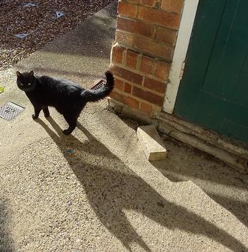 世界の多くの国々では「黒ネコが目の前を横切ると不吉」と言われていますが、イギリスではその逆で黒猫は幸運の象徴。