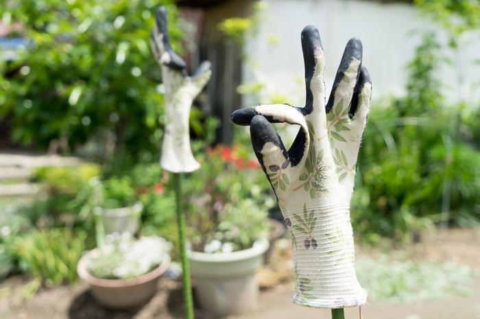 ヒヤシンスの球根には「シュウ酸」が含まれているため、人によってはかゆみを引き起こすこともあるので、肌が弱い方は手袋をして作業をすると良いかも。