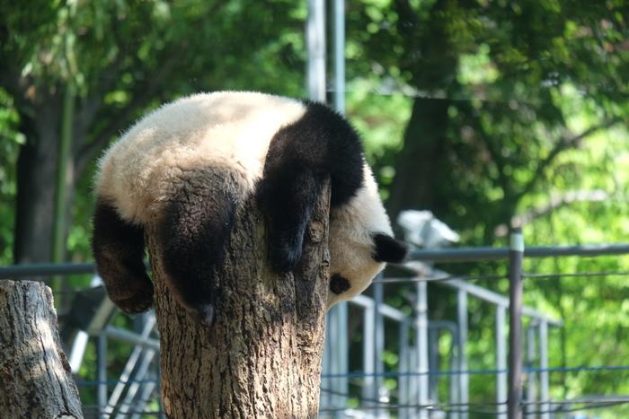 仕事や人付き合いに疲れてしまったら、動物園や水族館に足を運んでみませんか? のんびりとした生きものたちをボーっと眺めていると、つらい気持ちもしだいに癒されてくるはず。ふだん動物に興味がない方こそ、日常から遠く離れた「もふもふアニマルさんぽ」を試してみてくださいね。