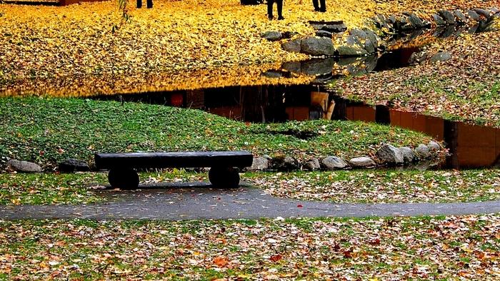 毎年見頃の10月下旬には、いちょう並木を一般公開する「北大金葉祭」が開催され、人気のライトアップも行われています。