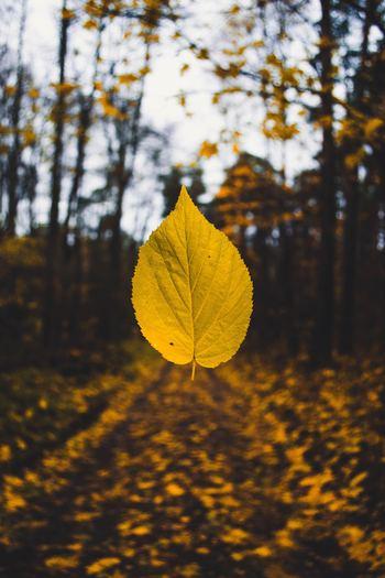 これからの季節、公園の木や街路樹などが一斉に葉を落とし始めます。子供の頃に、落ちてくる葉をつかまえようとしたことがある人は多いのでは? 幸運になるためですから、大人でもトライしてみましょう。