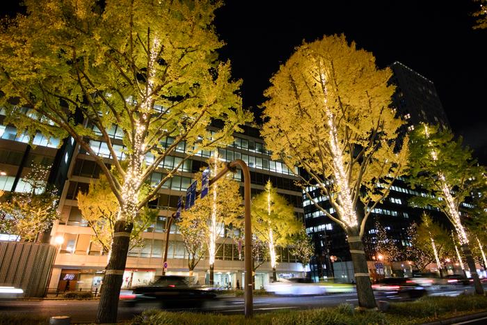 いちょうが色づく季節と同時期の毎年11月中旬から12月末までは、いちょう並木がライトアップされ、美しい夜の景色を演出してくれます。