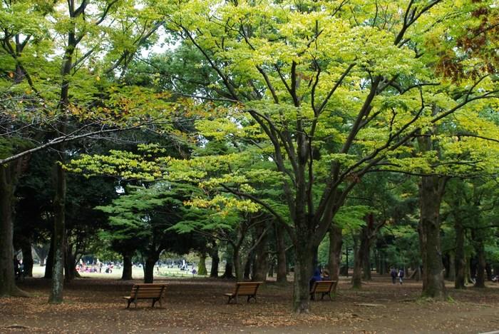代々木八幡は代々木公園のすぐお隣に位置するエリアで、渋谷や原宿に近いわりに、緑も多く、落ち着きのある雰囲気が楽しめる街です。お洒落な雑貨屋さんやカフェなども多く、お散歩スポットとしても人気です。