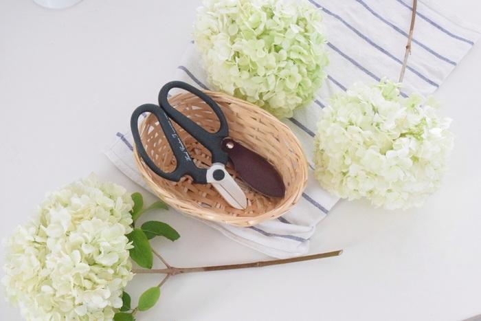 切花を楽しむ方に、ぜひ一本もっていただきたいのが花ハサミ。こちらは創業100年を超える老舗「坂源」の園芸ハサミ。枝や茎も握力いらずでスパッと切れて、花の持ちがよくなるそうです。
