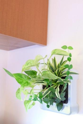 こちらは無印良品の「壁にかけられる観葉植物」。子供がいるので、床に置くものは倒れそうで…という方でも、これなら安心して飾れるのでは?