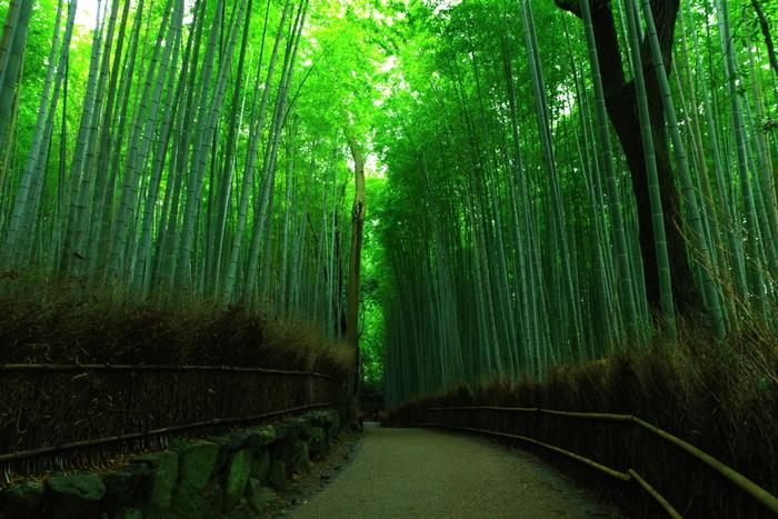 紅葉はしないものの、渡月橋の北にある竹林も嵐山の名所。静謐な空間が広がっています。