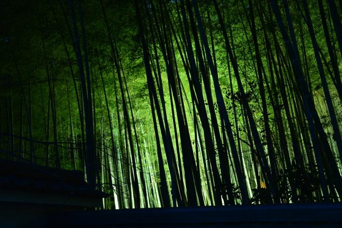 毎年12月には「京都・嵐山花灯路」というライトアップイベントが行われ、昼間とは異なる幻想的な雰囲気に。このイベントでは竹林以外にも渡月橋周辺もライトアップされます。