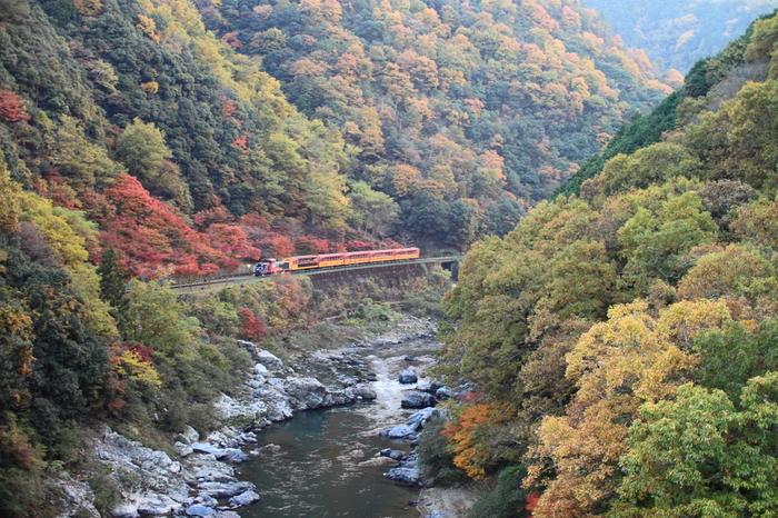 嵐山から亀岡までを結ぶ「嵯峨野トロッコ列車」。約25分間、レトロなトロッコに揺られながら保津峡の景色を楽しむことができます。紅葉の時期は特に人気が高く、事前の予約がおすすめです。