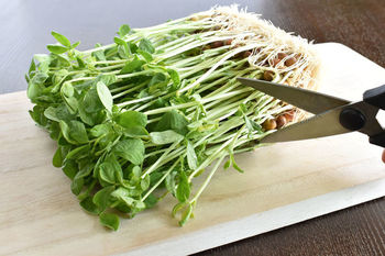 β-カロテンやビタミンK、葉酸など栄養をたっぷりと含んでいる豆苗。ほうれん草やニラなどの緑黄色野菜の中でも栄養豊富な野菜です。