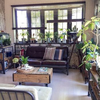 たくさんの植物を、ウッドブラインドを吊るした出窓に並べて。ブラインドは光の調節をしやすいので、植物を育てるにも最適です。