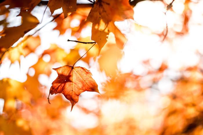 秋の夜長、みなさんはどうお過ごしですが?読書や編み物などを楽しんでいる方も多いと思いますが、そのお供に素敵な音楽はいかがでしょうか?