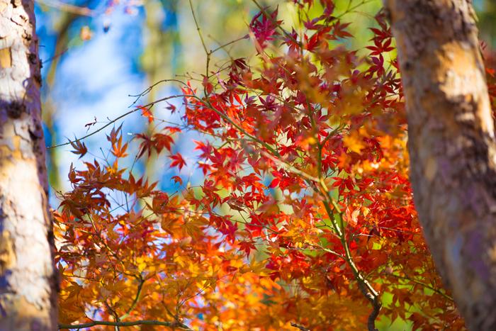 秋ならではの絶景を堪能♪【関東】のおすすめ紅葉スポット&紅葉露天