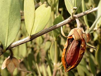砂漠で育つ「ホホバ」という植物の種子から作られた「ホホバオイル」。栄養価が高いため、古くから食用として、そしてヘアケアやスキンケアに重宝されてきました。