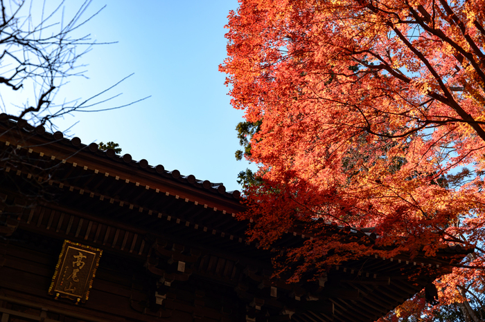 東京の登山スポットとしても有名な高尾山の紅葉の見頃は11月中旬~下旬。電車の車窓や下車すぐから紅葉が楽しめるのも嬉しい。ケーブルカーやリフトで行くのもよし、登山を楽しむのよし、帰りは駅近くの日帰り温泉に寄るのもおすすめです。