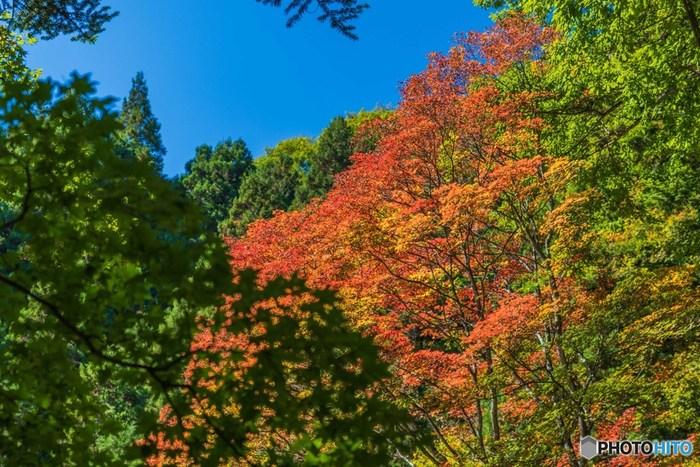 11月上旬から中旬が見頃の霊山・御岳山。神聖な空気を感じながらゆったりと歩いてみください。山頂近くまでケーブルカーで登ることができますが、都心部とは約6℃の気温差があるので服装にはご注意ください。