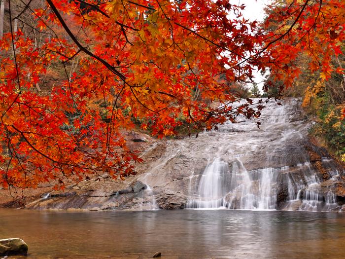 11月中旬から12月上旬が見頃となる養老渓谷。養老渓谷温泉街や栗又の滝ではライトアップも行われています。また、毎年11月23日には養老渓谷もみじまつりが開催されます。