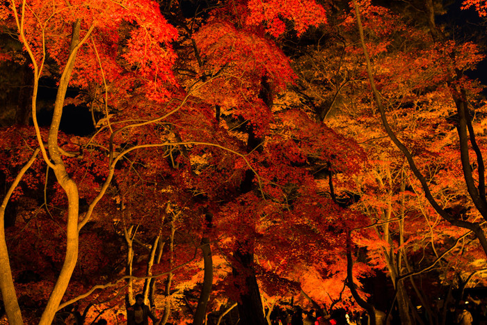 ネーミングもロマンティックな月の石もみじ公園。その名の通り紅葉の時期は多くの人が訪れます。11月上旬から下旬が見頃となり、11月3日~25日は月の石もみじ公園ライトアップのイベントも行われます。