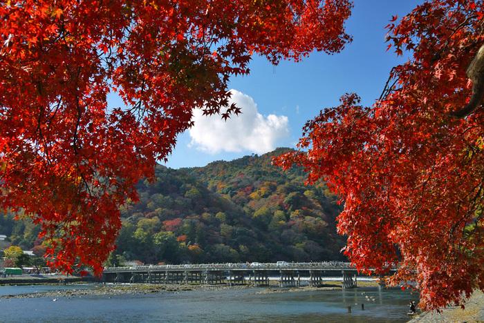 嵐山の魅力は、なんといっても「野山の紅葉」が楽しめるところ。その昔、山に入って紅葉を楽しむことから「紅葉狩り(もみじがり)」と名が付いた通り、自然のままの素朴な紅葉を眺めることができます。