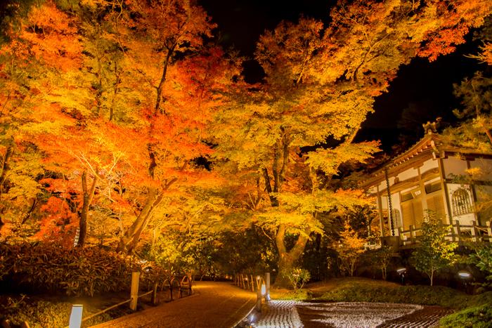 ライトアップされる紅葉を楽しむなら、天龍寺の塔頭寺院「宝厳院」へ。2018年は11月9日~12月2日17時30分~20時30分まで夜の特別拝観が行われ、ライトアップを楽しむことができますよ。