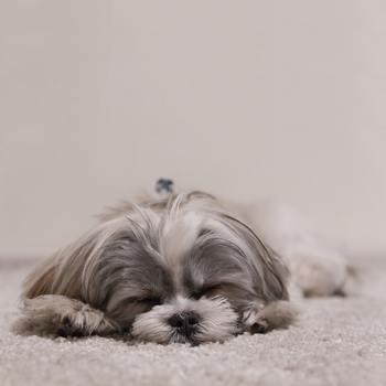 朝活にはいろいろなメリットがありますが、生活習慣がうまく変更できていないままだと、「昼間に眠くなってしまう」というトラブルが起きることも。早起きをしても、全体の睡眠時間が足りないと仕事中に睡魔に襲われることもあるでしょう。さらに、早起きを重ねることで、慢性的な睡眠不足が続いて体調不良になってしまう可能性も。元気に朝活を行うためには、健康的な「早寝早起き」が大事。常に体調管理を意識しながら行うことがコツですよ♪