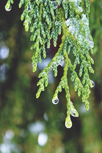 深い森の中を思わせる清涼なヒノキの香りは、動揺した気持ちを落ち着かせ、ゆっくりと前向きにしてくれます。また、血行促進作用もあるので、むくみや疲労にも効果的です。
